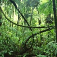 La ley de la selva y la inseguridad jurídica